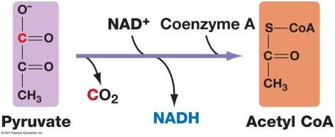 09_14_pyruvate_oxidized-L