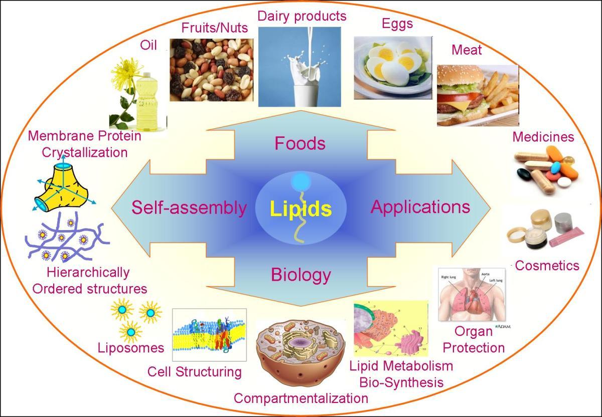 Reflection 24 Lipids 1 Biochem Insider